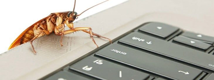 How to Deal with Common Pests in the Office